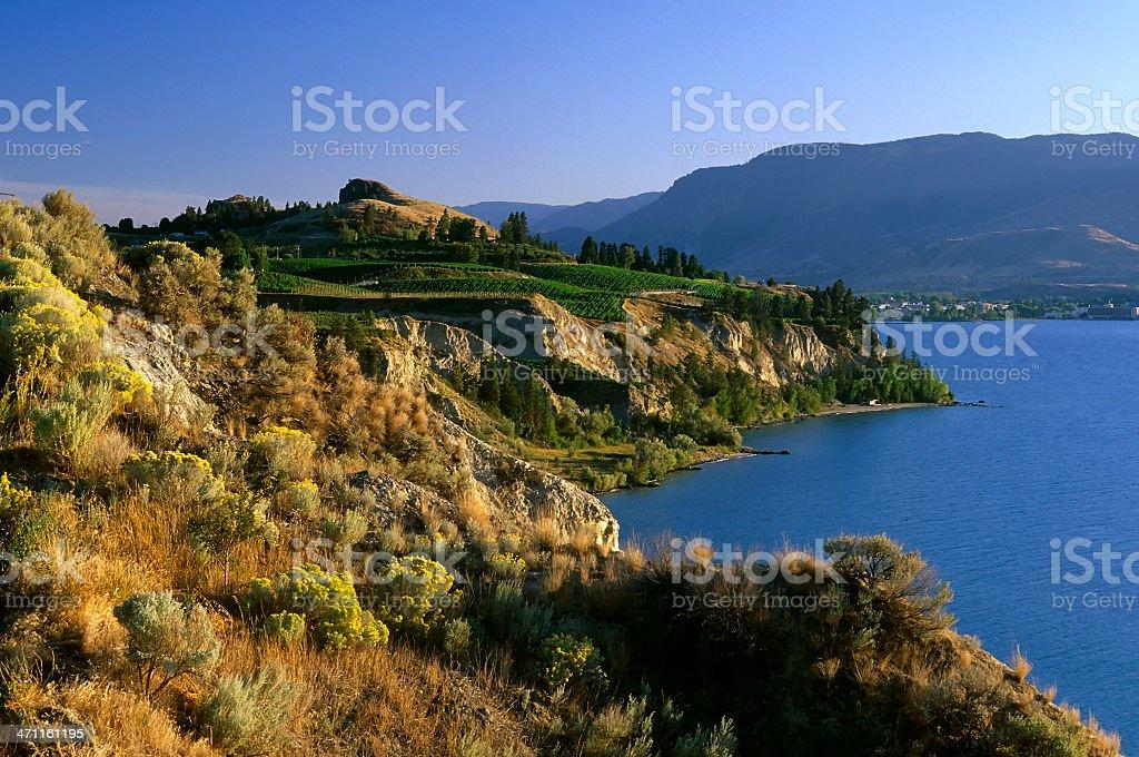 okanagan valley vineyard winery royalty-free stock photo