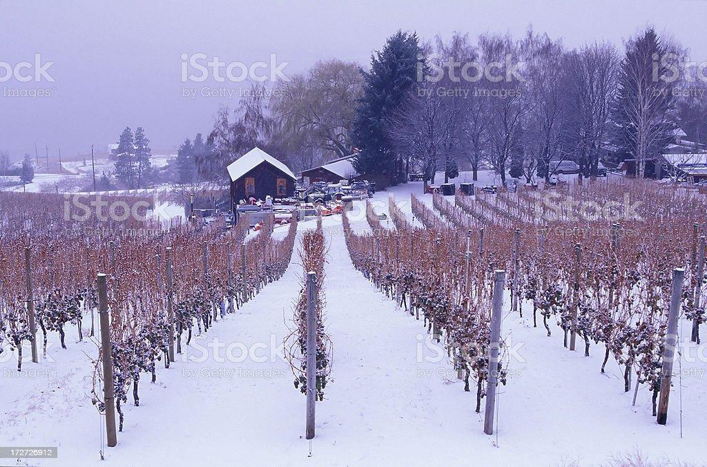 okanagan valley vineyard winter landscape ice wine stock photo