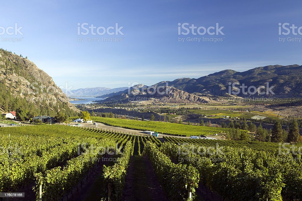 okanagan valley vineyards  penticton british columbia royalty-free stock photo