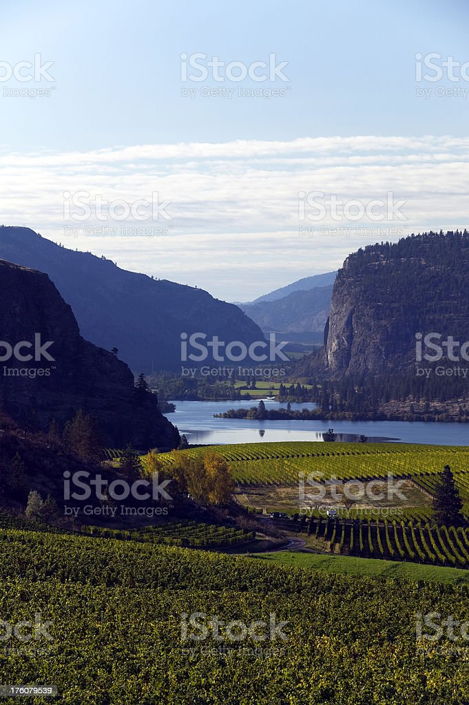 okanagan valley vineyards  penticton british columbia royalty-free stock photo
