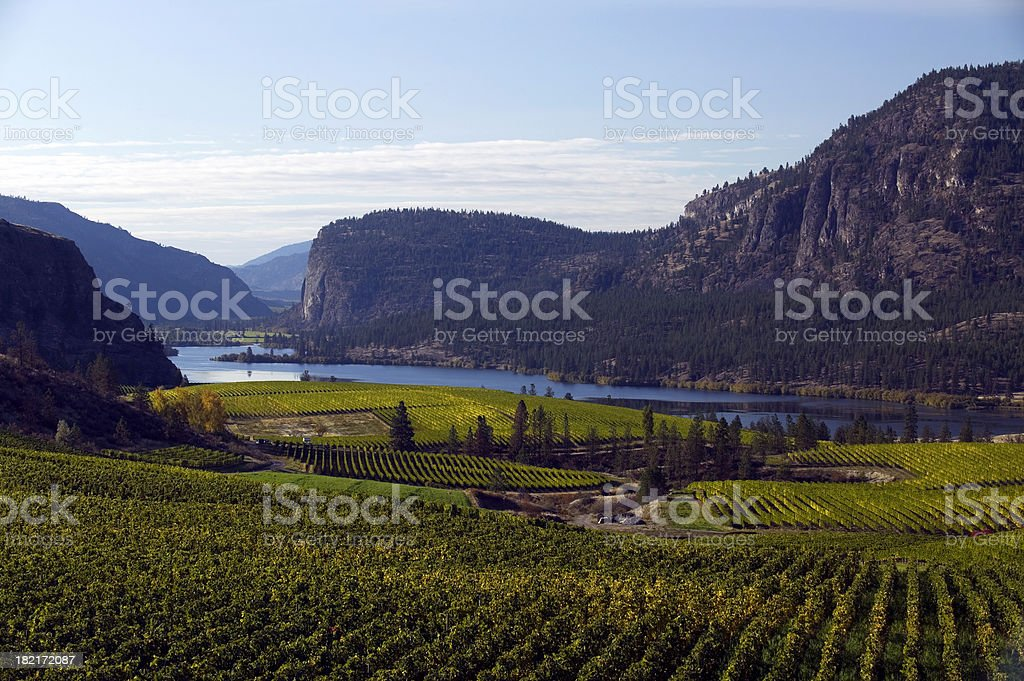 okanagan valley vineyards  penticton british columbia stock photo