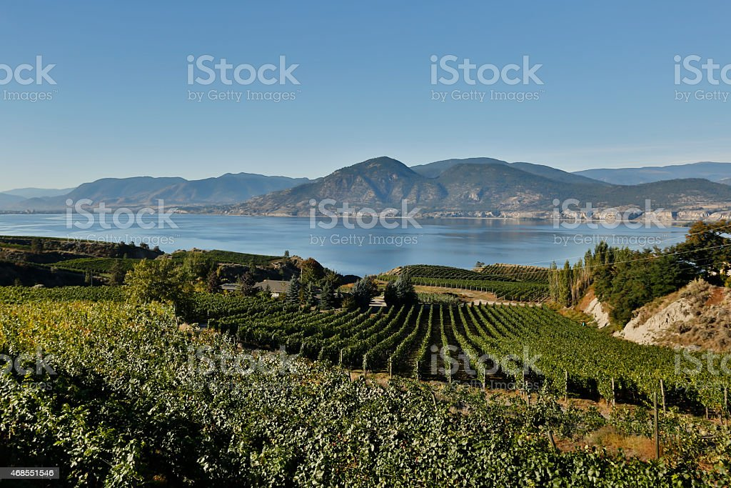 okanagan valley vineyards winery scenic naramata stock photo