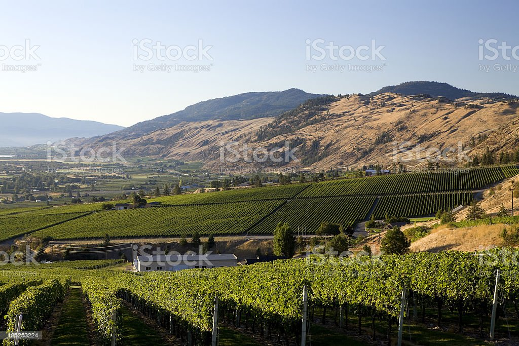 okanagan valley winery vineyard royalty-free stock photo