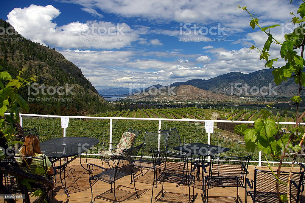 Okanagan Vineyard stock photo