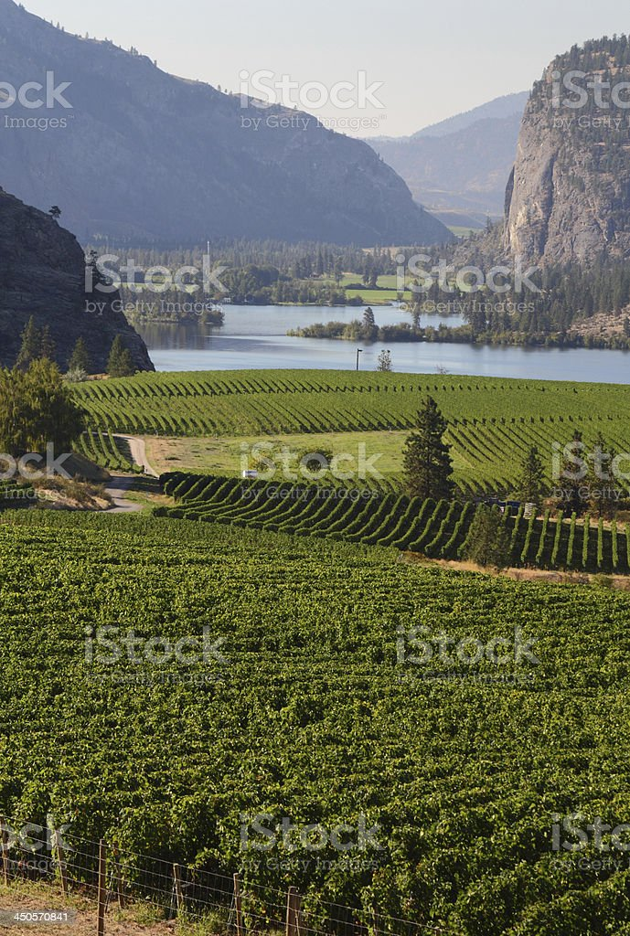 Okanagan Vineyard Scenic, British Columbia stock photo