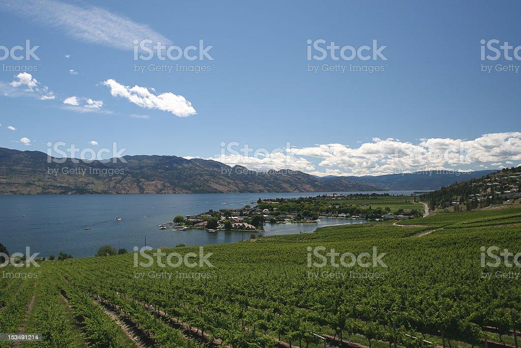 Okanagan Vineyards royalty-free stock photo
