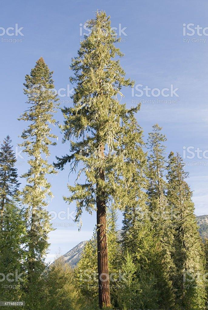 Okanogan-Wenatchee National Forest, Washington State, USA stock photo