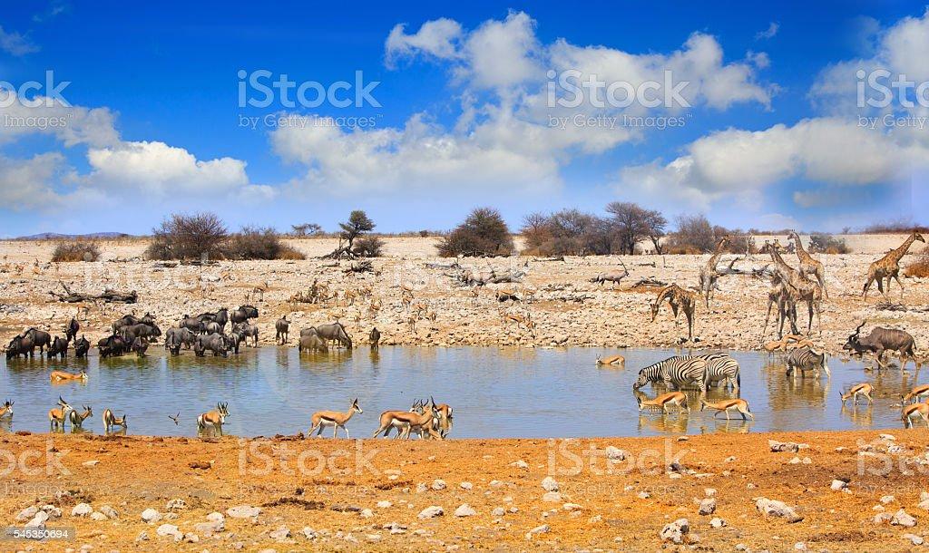 Okaukeujo Waterhole i Etosha stock photo
