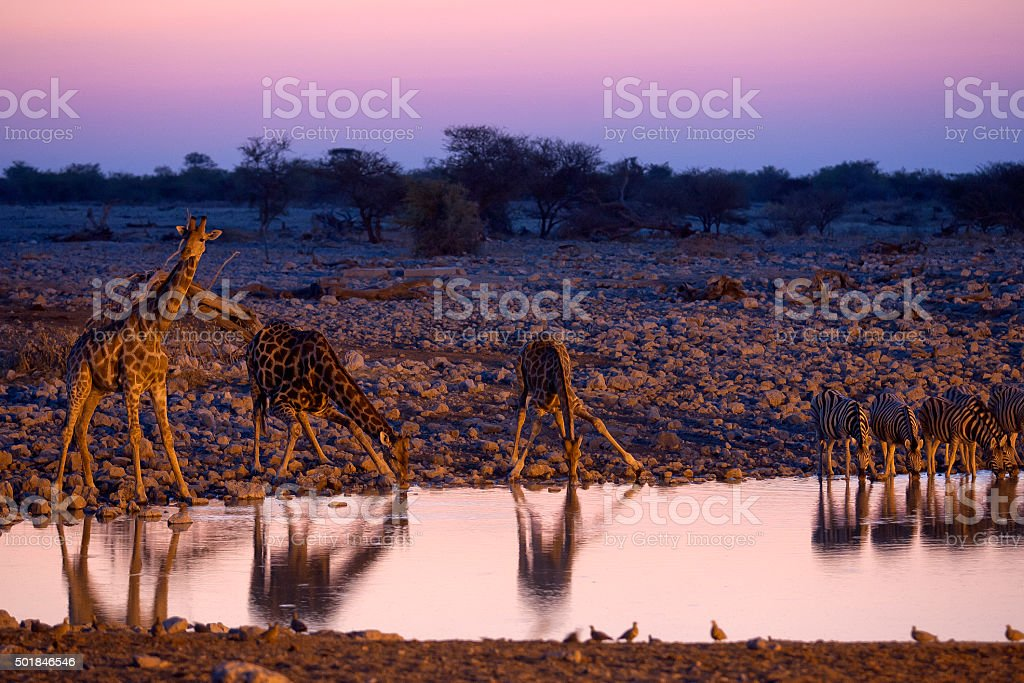 Okaukuejo waterhole, Etosha National Park, Namibia stock photo