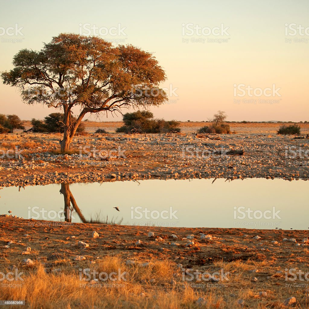 Okaukuejo Waterhole Landscape at Sunrise - Etosha National Park Namibia stock photo