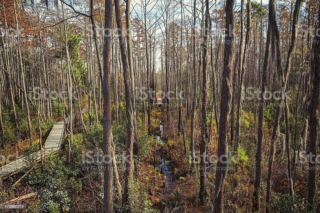 Okefenokee Swamp royalty-free stock photo