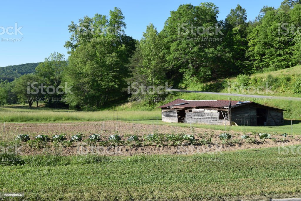 Old abandoned barn in farmer's garden stock photo