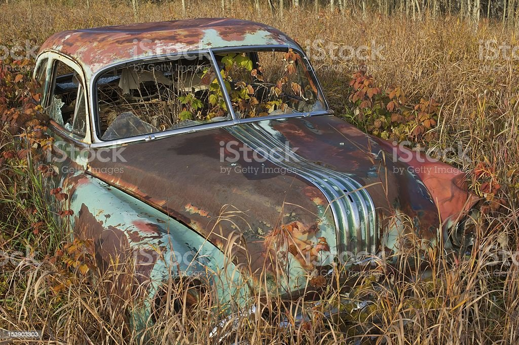 old abandoned car in blackberries and grass royalty-free stock photo