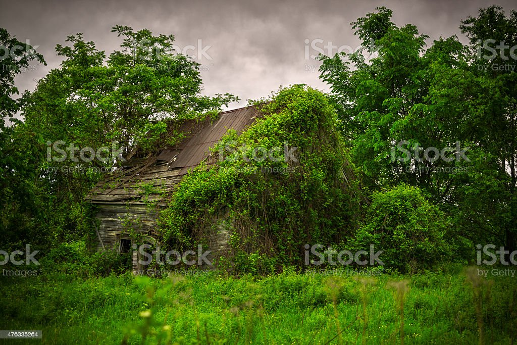 Old, Abandoned, Derelict, Ivy Covered Cabin stock photo