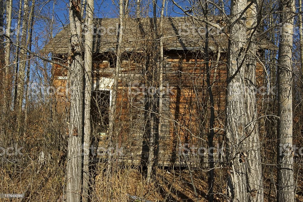 old abandoned farm building: house in cottonwoods and caraganas stock photo
