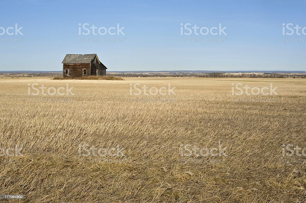 old abandoned farmhouse: a decrepit house in harvested canola field royalty-free stock photo