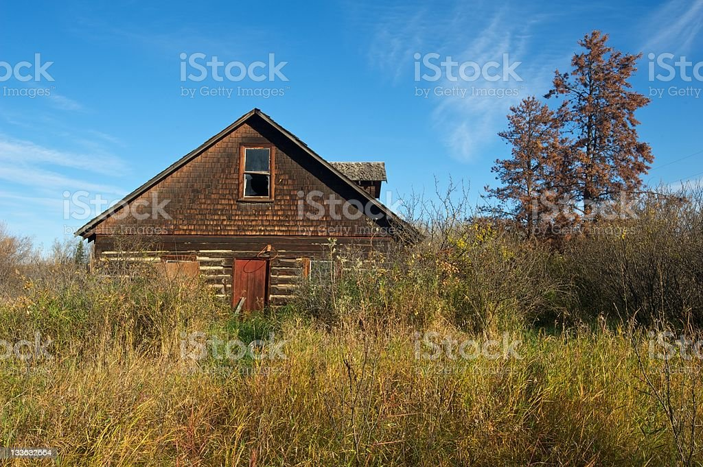 old abandoned farmhouse: derelict house surrounded by caragana bushes stock photo