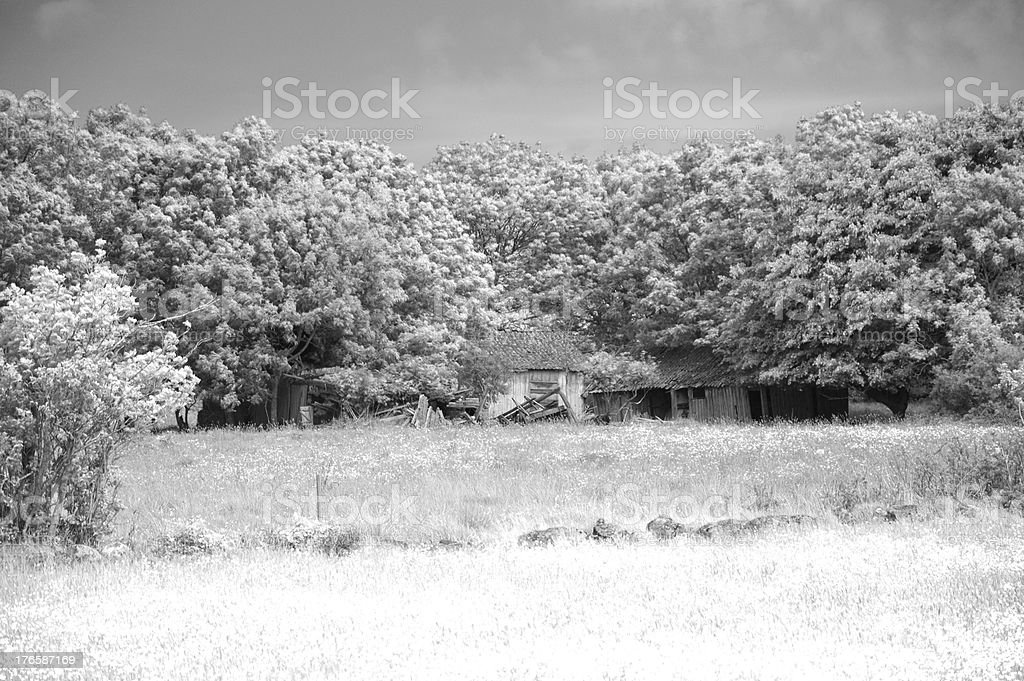 Old abandoned house hidden by trees stock photo