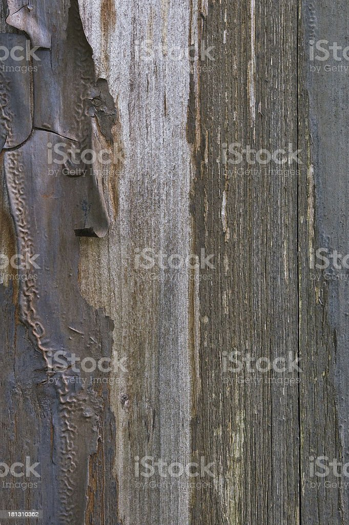 Old aged weathered grunge color-peel wood texture, vertical background closeup royalty-free stock photo