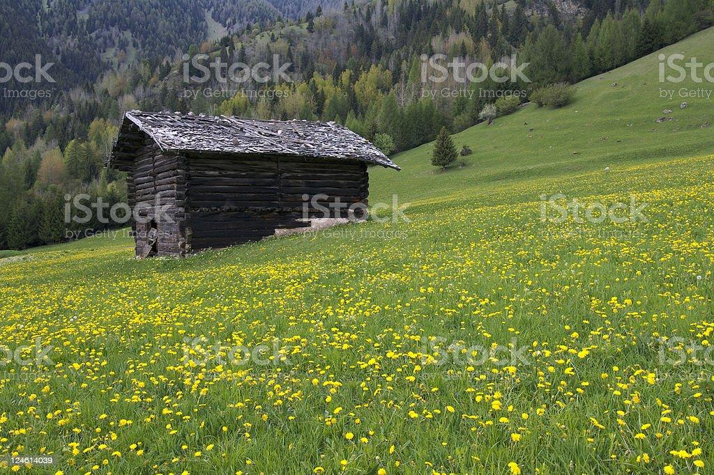 old alpine hut stock photo