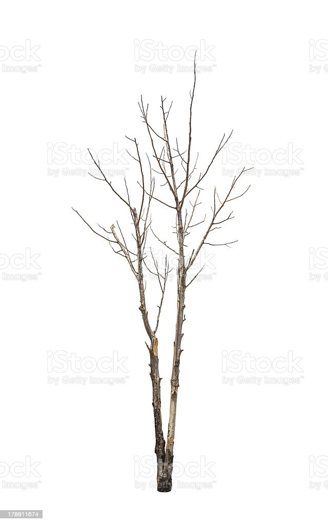 Old and dead tree royalty-free stock photo