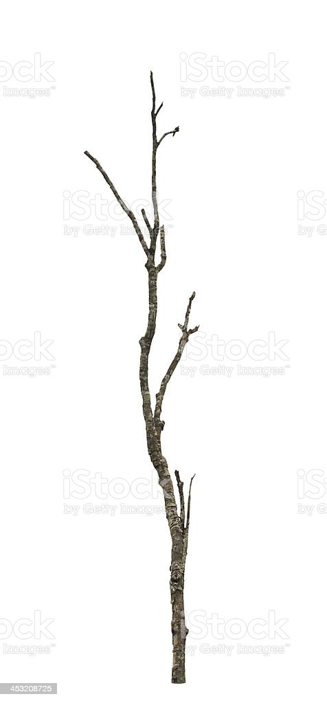 Old and dead tree. stock photo
