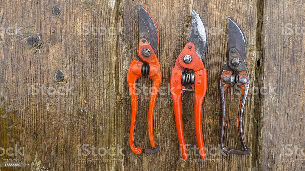 old and new pruner on wood stock photo