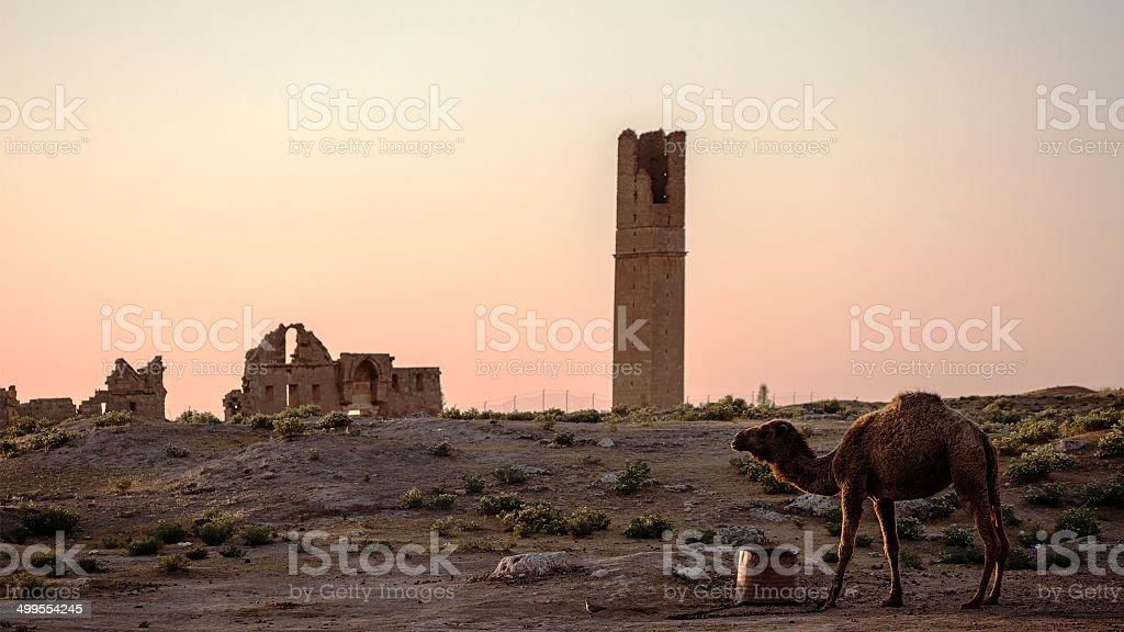 Old Antique City of Harran, Sanliurfa, Turkey stock photo