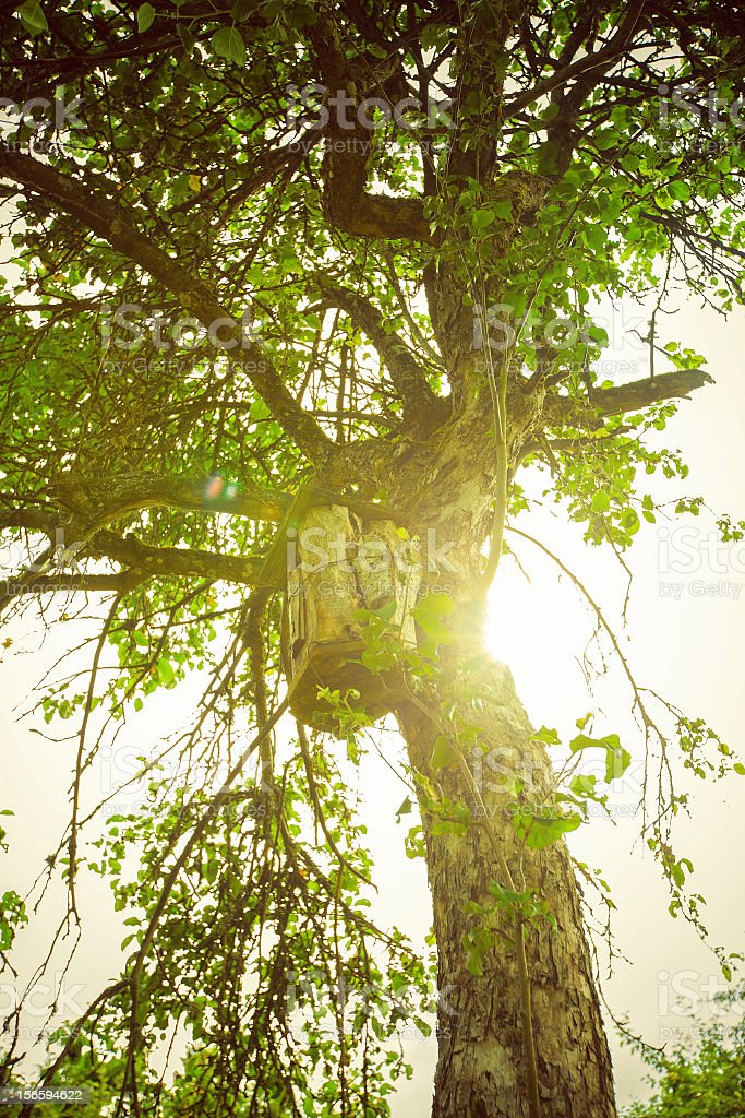 Old apple tree and birdhouse royalty-free stock photo
