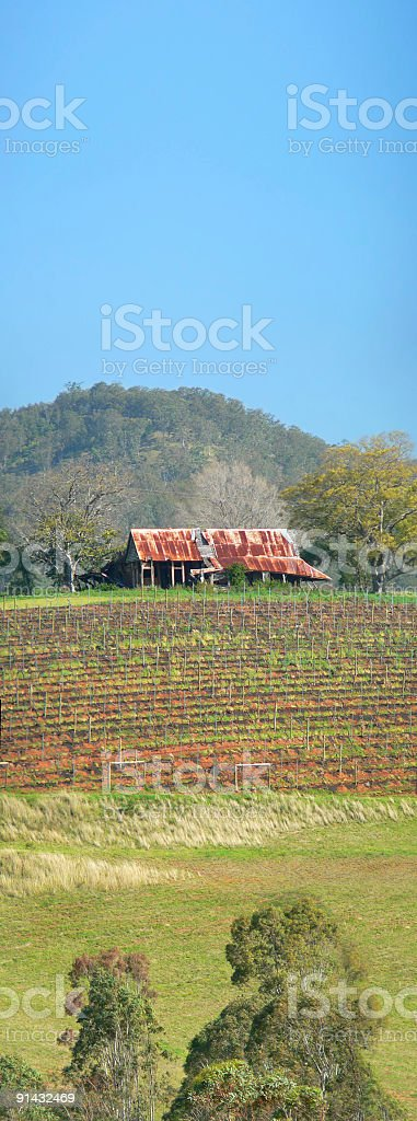 Old Australian Shack overlooking Vineyard - Vertical Panorama royalty-free stock photo