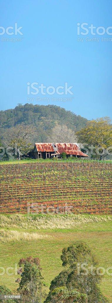 Old Australian Shack overlooking Vineyard - Vertical Panorama stock photo