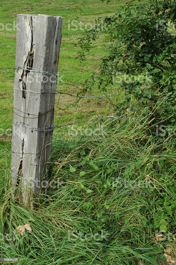 Old barbwire on a wood peg stock photo
