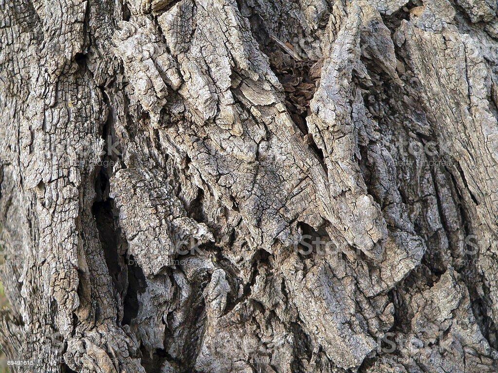 Old bark royalty-free stock photo