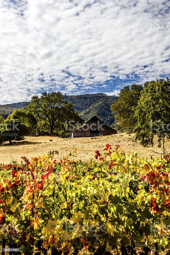 Old barn above red and gold vines stock photo
