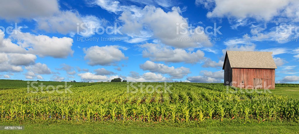 Old barn and corn field stock photo