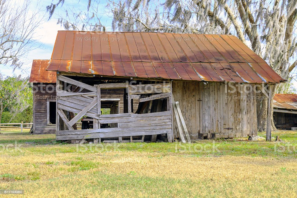 Old Barn and dying Oak Tree stock photo