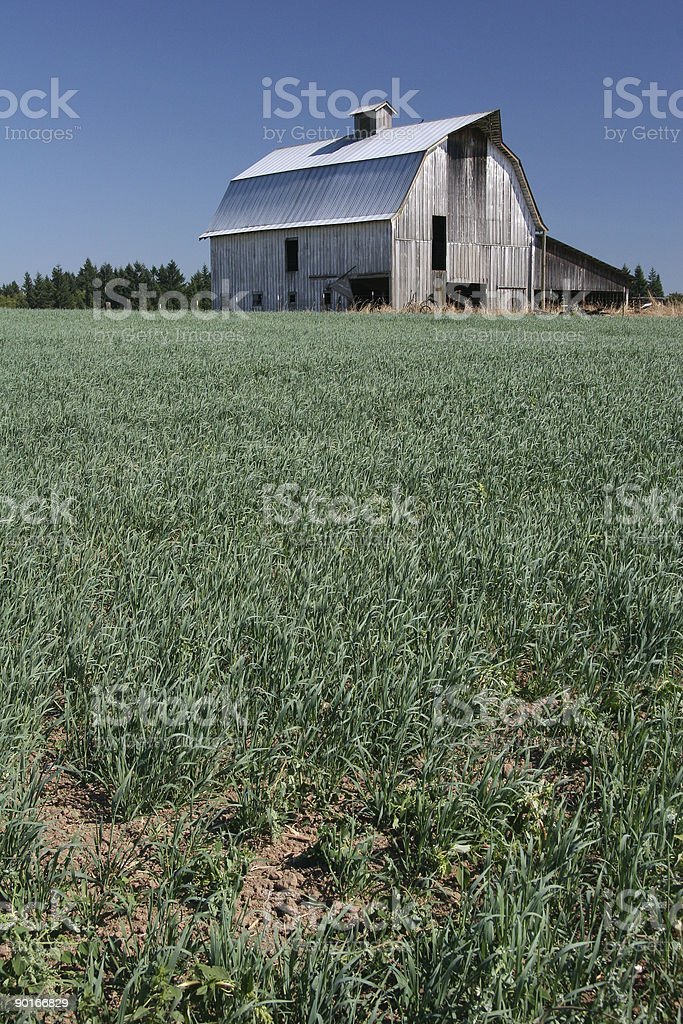 Old barn and field stock photo