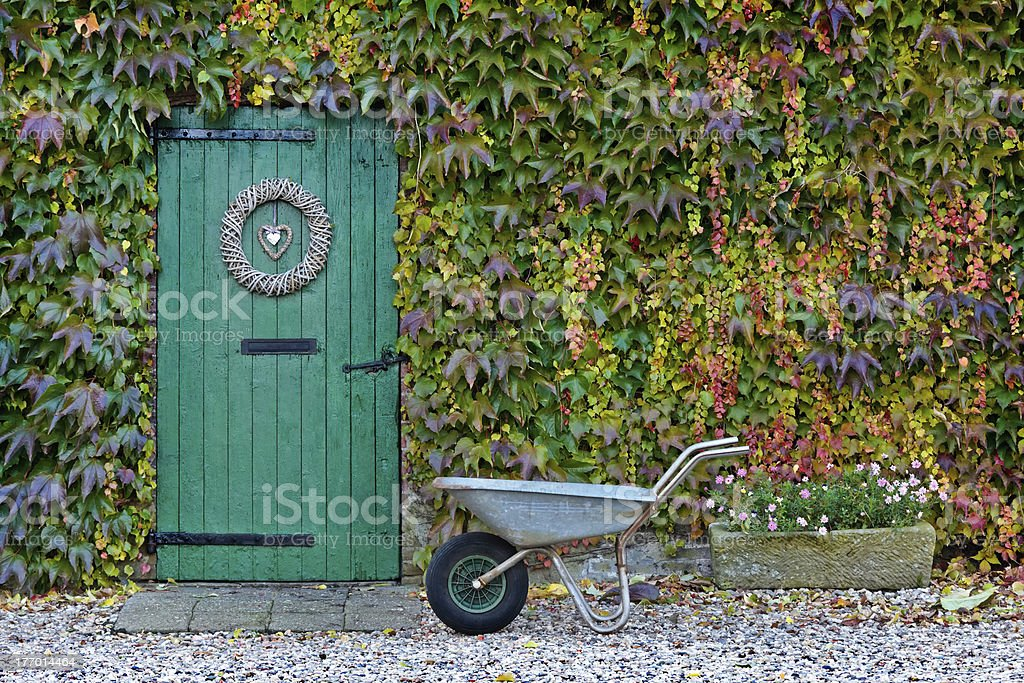 Old barn covered with ivy during autumn royalty-free stock photo