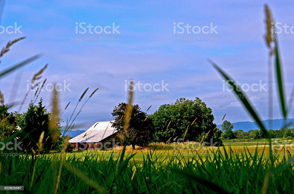 Old barn in pasture on Sauvie Island stock photo