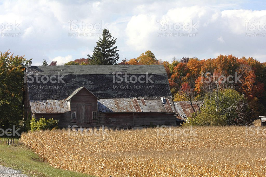 Old Barn with Cow Sign stock photo