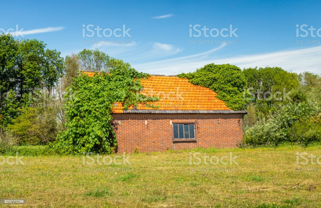 Old barn with orange tiled roof overgrown with wild plants stock photo