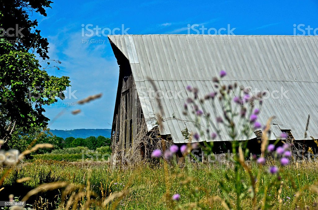 Old barn with purple thistle and clear summer sky stock photo