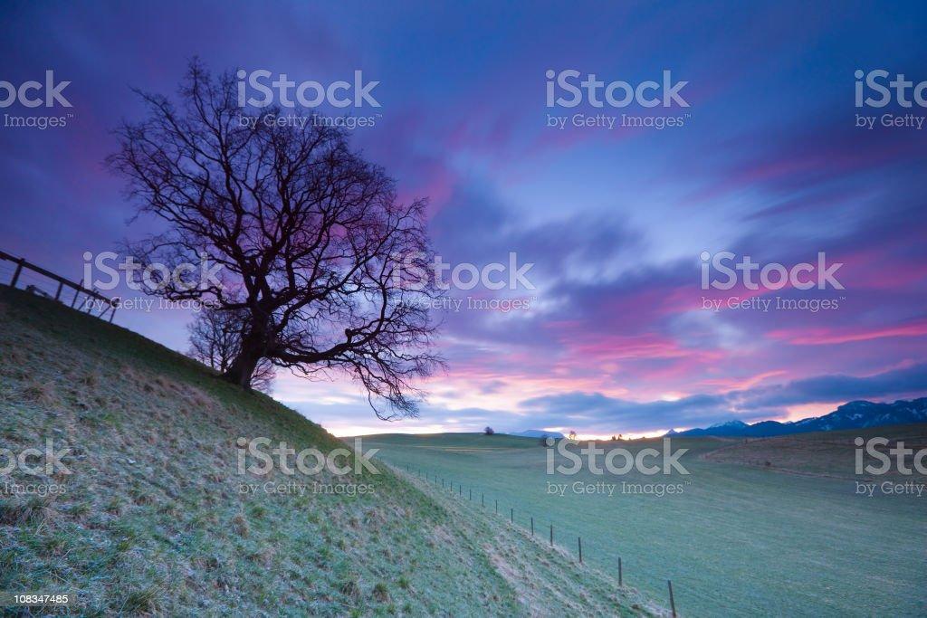 old bavarian oak- allgau - germany royalty-free stock photo