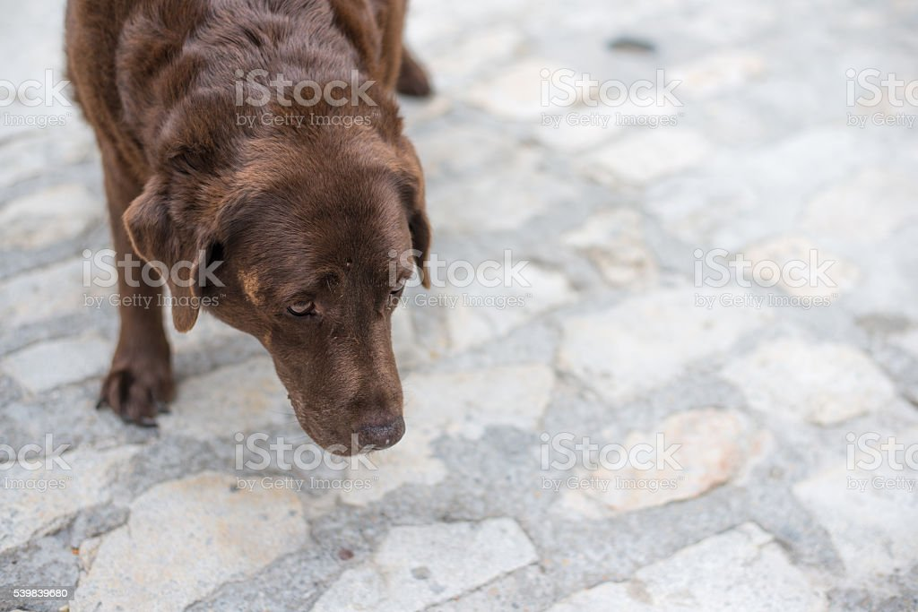 Old beaten dog avoids eye-contact with an unknown stranger stock photo