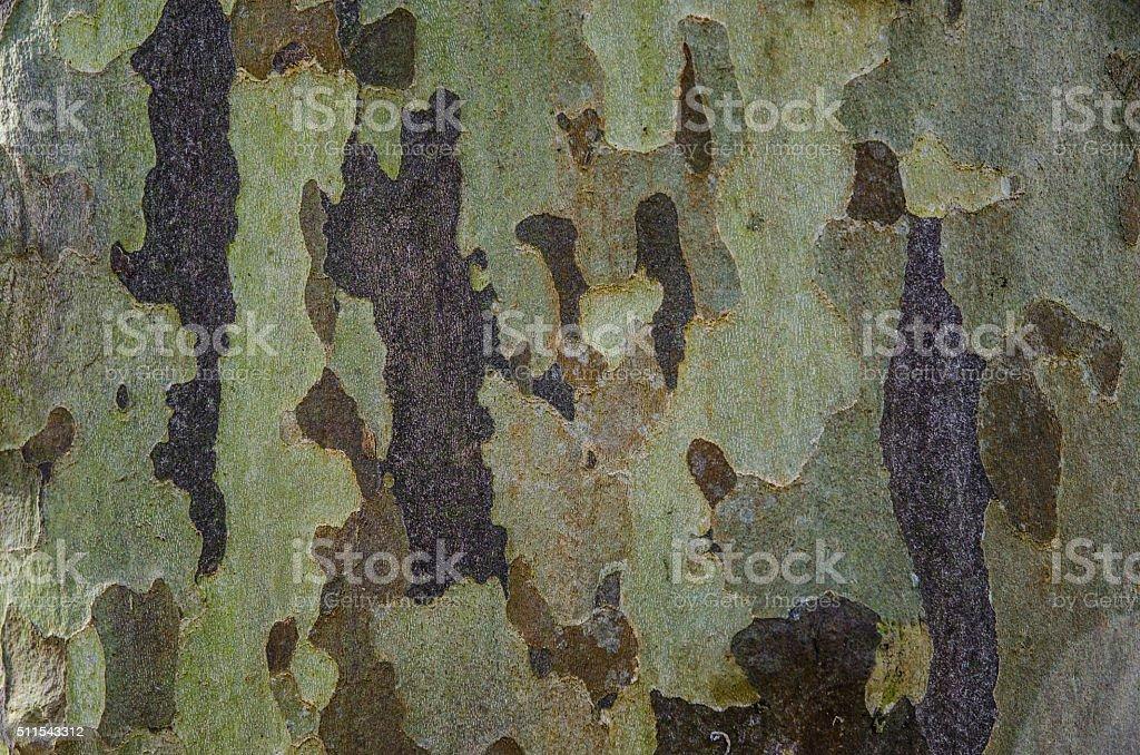 Old beech tree bark natural texture stock photo
