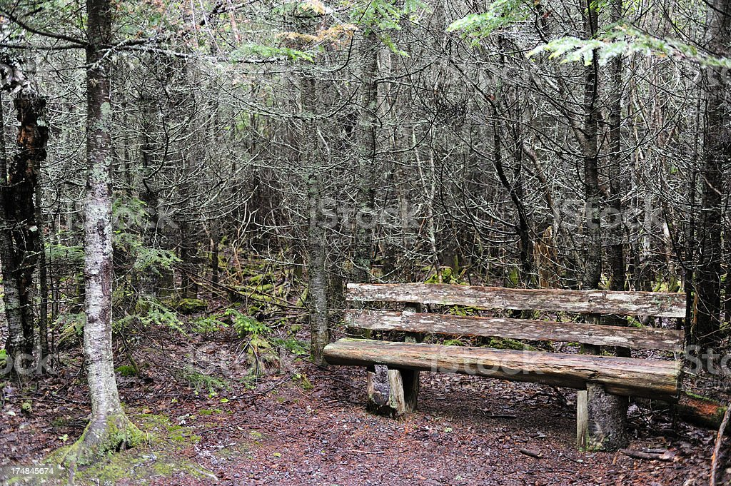 Old bench in forest royalty-free stock photo