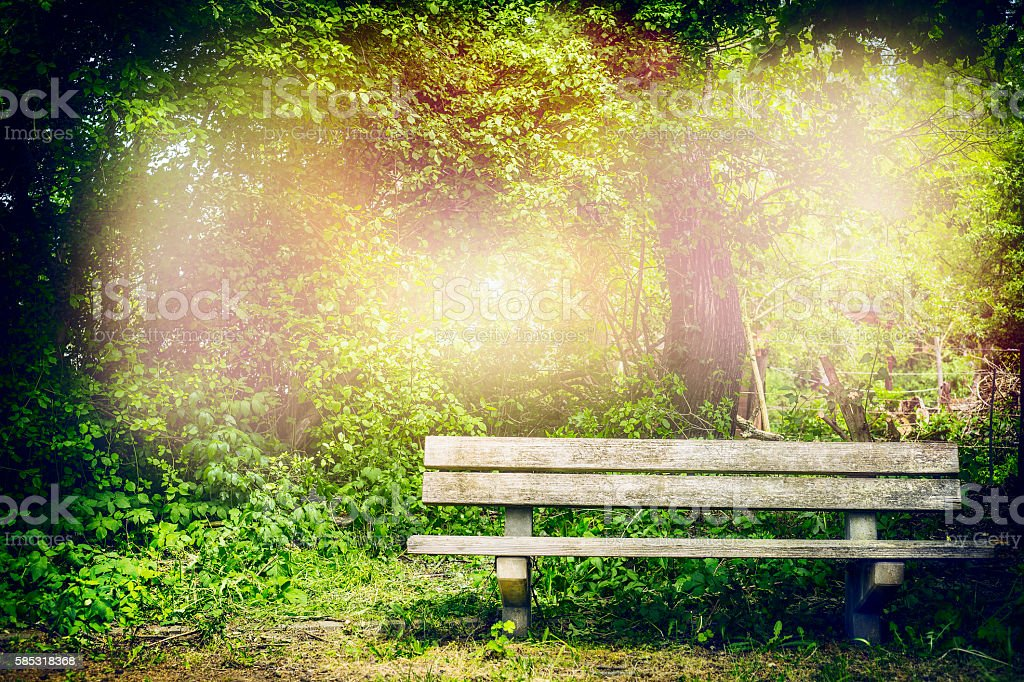 Old bench in summer park or forest, Outdoor stock photo