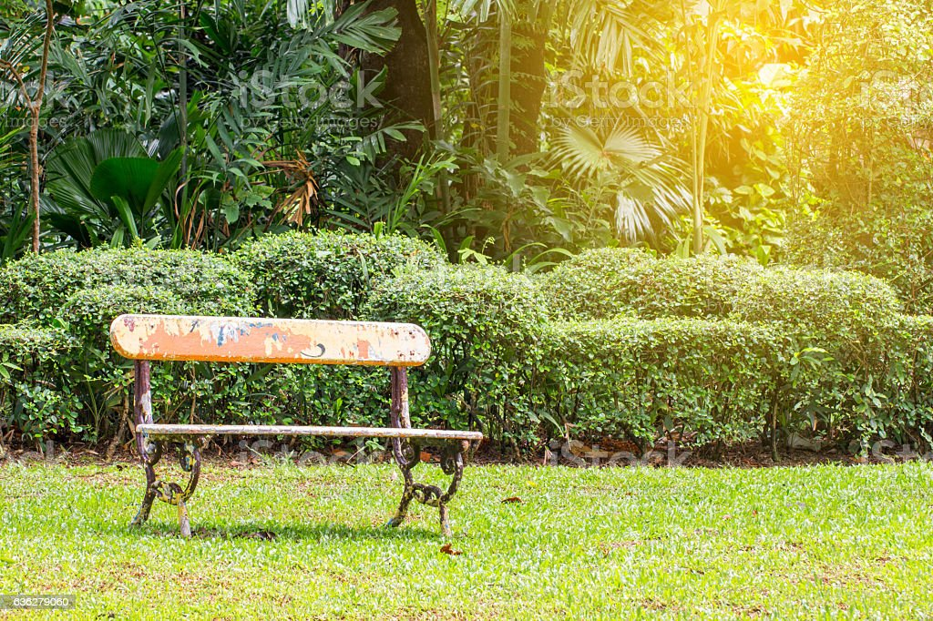 old bench in the garden field with tree stock photo