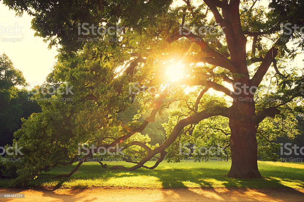 Old big tree in the park stock photo