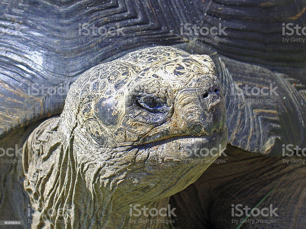 Old big turtle royalty-free stock photo